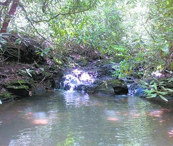 Foothills Conservancy reaches 50,000 acre milestone