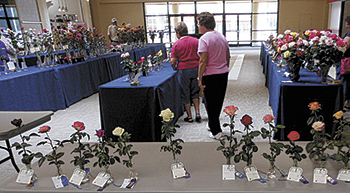 Cleveland - Lincoln County Rose Society 42nd Annual Rose Show