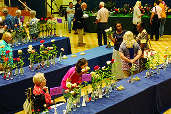 Rose Society Annual Rose Show is Sept 30, 2017