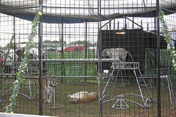 Tiger Encounters At This Year's Fair