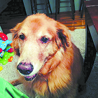 Yard sale to raise funds for dog park