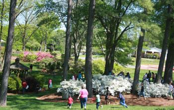 Easter Celebration And Egg Hunt At Shelby City Park