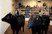 6th Annual Sale Generates Over $96,000