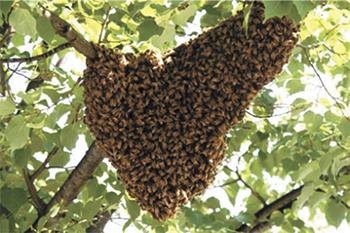 Bee Keeping News...