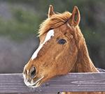 Horse Industry Promotion Referendum